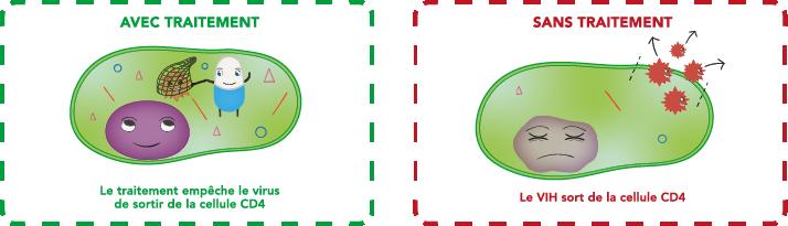 Le traitement empêche le virus de sortir de la cellule et d'infecter d'autres cellules CD4